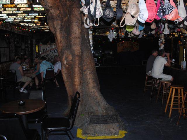 Hanging Tree at Capt Tony's Saloon